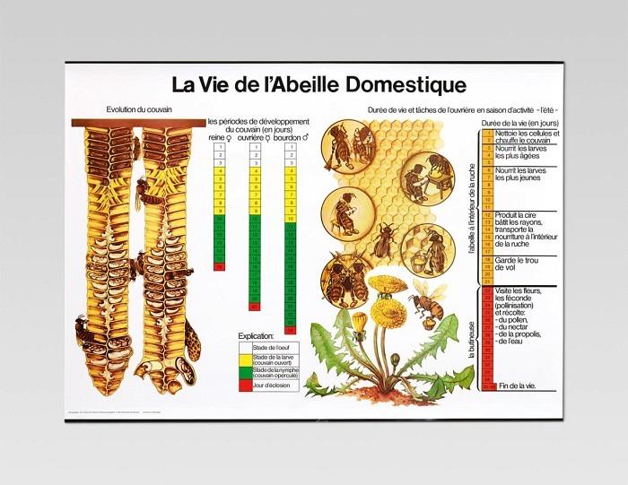 Lehrtafel «La vie de l'abeille»